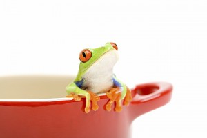X2-Digital-Manchester-Digital-Marketing-frog-post